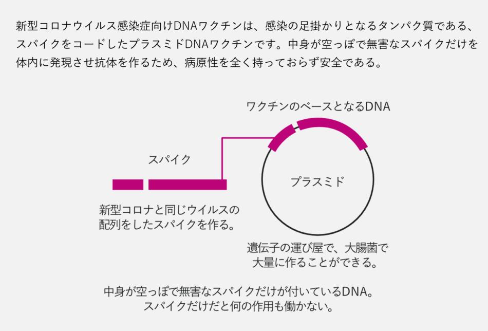 大阪のバイオベンチャーであるアンジェス社のDNAワクチン技術について図解しています。